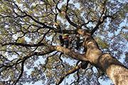treethinning